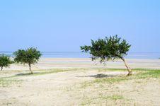 Free Trees In Desert Royalty Free Stock Photo - 4247235