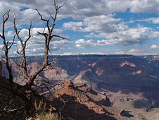 Free Dead Tree, Grand Canyon, Arizona Stock Images - 4247394