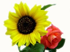 Free Sunflower With Rose Stock Images - 4248424