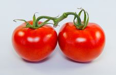 Free Tomatos Stock Images - 42417074