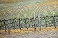 Free Vineyard - Chianti, Italy Royalty Free Stock Images - 4259379