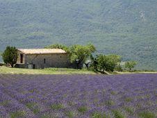 Free Lavender Field Stock Photo - 4251410