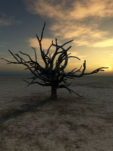Free Barren Tree 230 Royalty Free Stock Images - 4251639