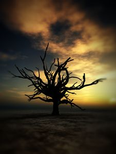 Free Barren Tree 232 Royalty Free Stock Images - 4251659