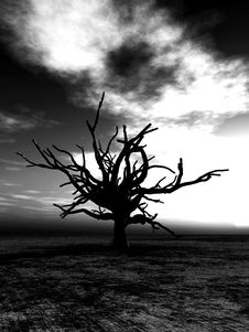 Free Barren Tree 233 Stock Photography - 4251672