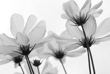 Free Spring Royalty Free Stock Images - 4251939