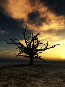 Free Barren Tree 21 Stock Images - 4252184
