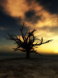 Free Barren Tree 22 Stock Photography - 4252192