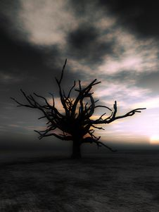 Free Barren Tree 23 Royalty Free Stock Photo - 4252195