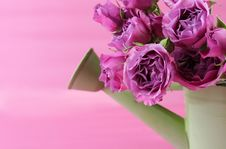 Free Pink Roses Royalty Free Stock Photo - 4252275