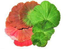 Free Colourful Leaves Royalty Free Stock Images - 4252309
