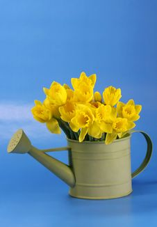 Free Daffodils Royalty Free Stock Photo - 4252325