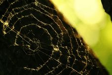 Free Spider S Web Royalty Free Stock Images - 4253639