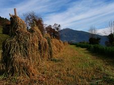 Free View Over Field In Tirol In Autumn Stock Image - 4253901