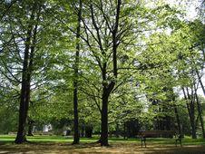 Free Tree In Tirol, Austria Stock Photos - 4253953