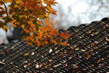 Free Late Autumn Stock Image - 4258981