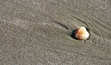 Free Oyster Shell  Lying On Sand Stock Photography - 4259002