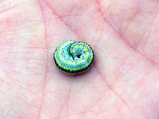 Free Captured Caterpillar Stock Images - 4259854