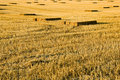 Free Straw Stubble Crop Harvest Stock Photography - 4268982