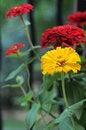 Free Outstanding Yellow Flower Stock Photo - 4269520