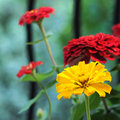 Free Yellow Flower Standing Out Royalty Free Stock Image - 4269546