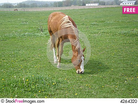 Free Bay Horse Eating Grass Stock Photo - 4264320