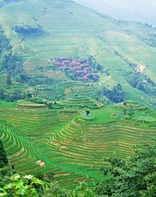 Free Terraced Field And Village Stock Image - 4260101