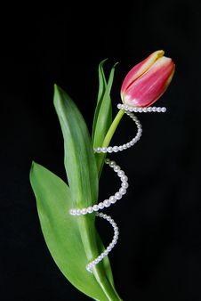 Free Spring Spiral Stock Image - 4260421