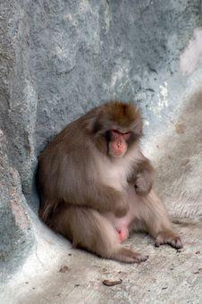 Free Melancholy Monkey Stock Image - 4261471