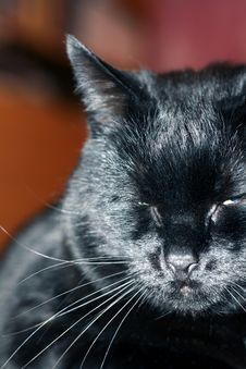 Free Black Cat Royalty Free Stock Images - 4262999