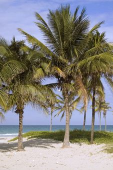 Coconut Palms On Tropical Beach Royalty Free Stock Photography