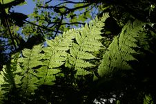 Free Ferns In Nature Stock Image - 4265231
