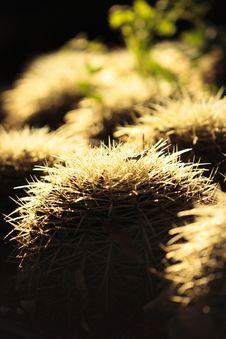 Free Spiky Round Cactus Stock Photo - 4267080