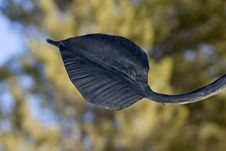 Free Iron Leaf. Royalty Free Stock Images - 4267889