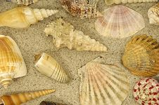 Free Shells In The Sand Stock Photo - 4269390