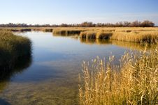Free Quiet Lake Stock Image - 4269861