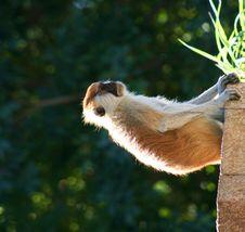 Free Monkey Stock Photography - 4269942