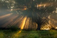 Free Sun Beams Thorough Trees And Greens Stock Image - 42627571