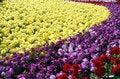 Free Flower Nursery In February Royalty Free Stock Photo - 4272055