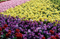 Free Flower Nursery In February Royalty Free Stock Images - 4272429