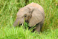 Free African Elephants Stock Photo - 4275270
