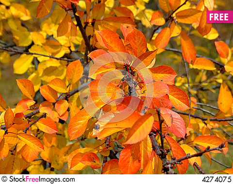 Free Fall Leaves Royalty Free Stock Photo - 4274075