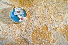 Free Almond Flowers On Stone Background Royalty Free Stock Image - 4270166