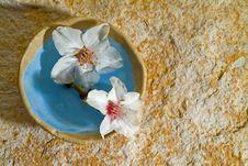 Free Almond Flowers On Stone Background Royalty Free Stock Photos - 4270308