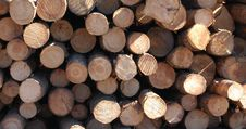 Free Wood Pile Royalty Free Stock Photography - 4271737