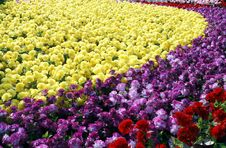 Free Flower Nursery In February Royalty Free Stock Photo - 4272055