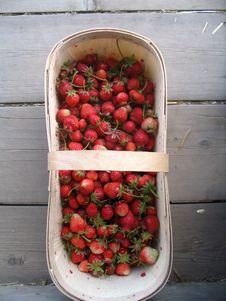 Free Freshly Picked Strawberries Stock Photo - 4272220