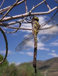 Free Dragon Fly Stock Images - 4273304