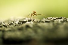 Free Ant Stock Photos - 4273673