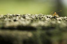 Free Ant Stock Image - 4273681
